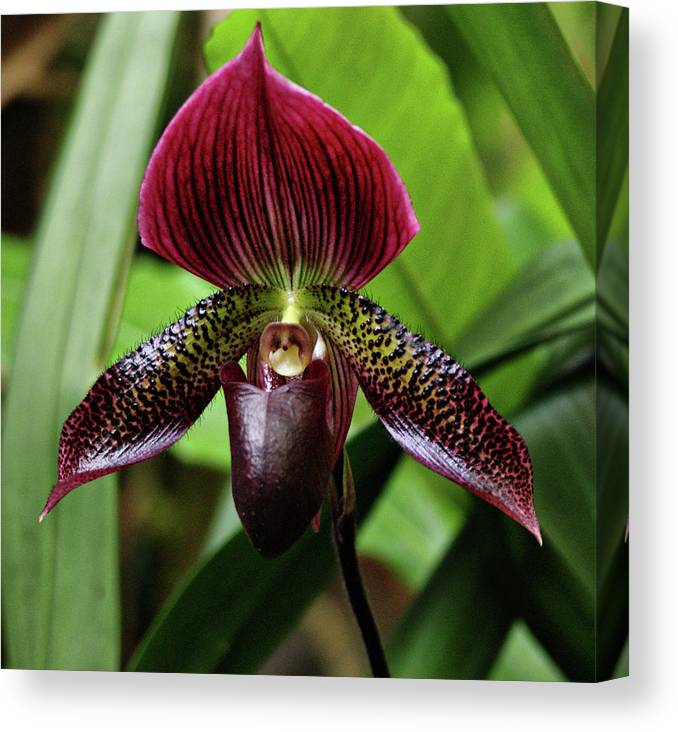 Orchid Canvas Print featuring the photograph Orchid by Sandy Keeton