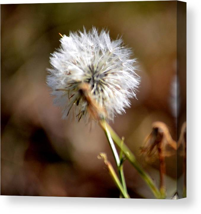 Spiney Flower Canvas Print featuring the photograph Righteous by Tanya Tanski