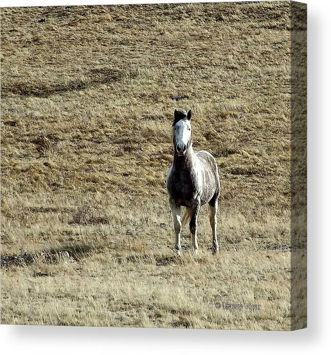 Horse Canvas Print featuring the photograph On Alert by Tracey Vivar
