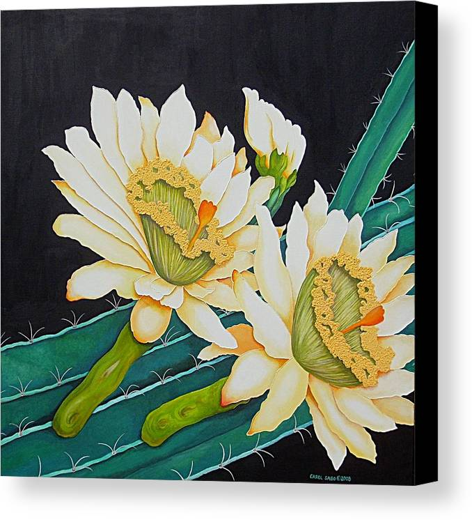 Cacti Canvas Print featuring the painting Night Blooming Cactus by Carol Sabo
