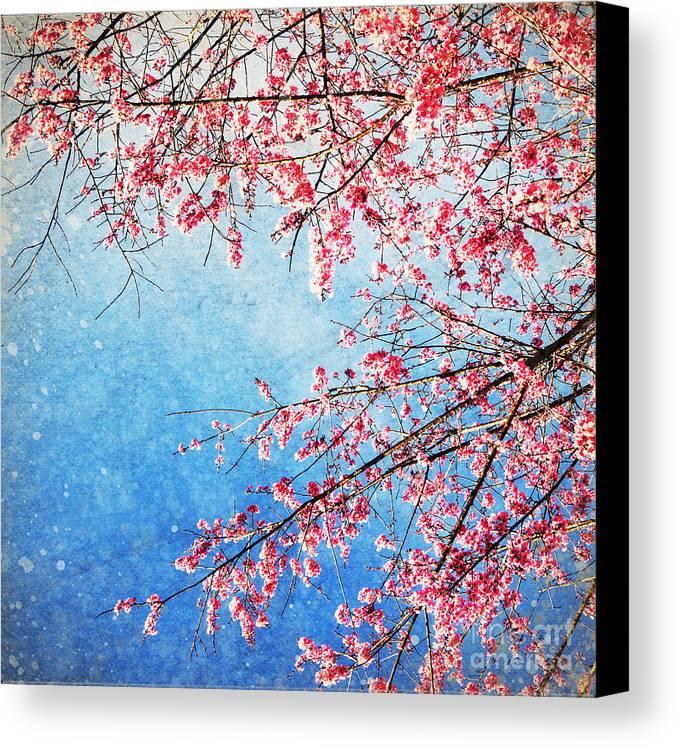 April Canvas Print featuring the photograph Pink Blossom by Setsiri Silapasuwanchai