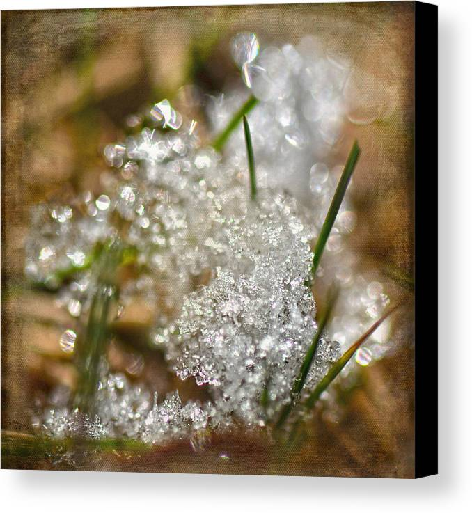 Snow Canvas Print featuring the photograph Snow And Ice Macro by Sandi OReilly