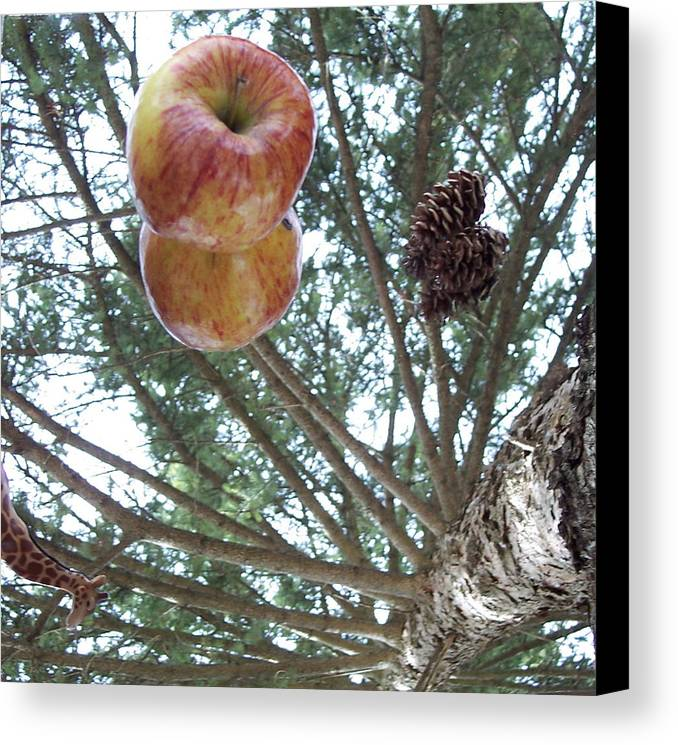 Tree Canvas Print featuring the photograph Tree Spiral by Michelle Miron-Rebbe