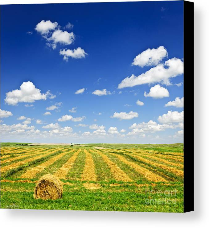 Agriculture Canvas Print featuring the photograph Wheat Farm Field At Harvest by Elena Elisseeva