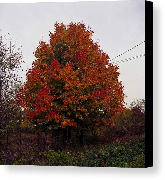 Foliage Canvas Print featuring the photograph Autumn In Big Hill by George Ferrell
