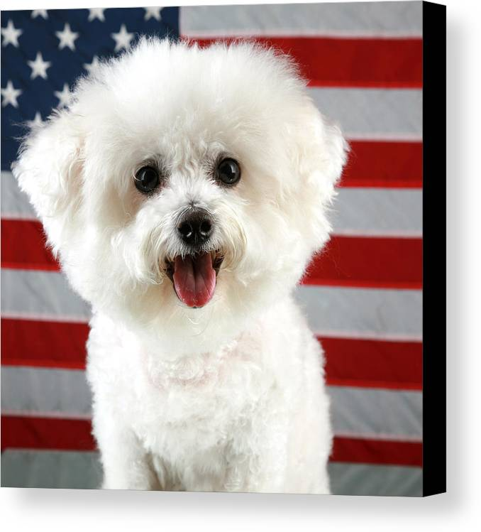 America Canvas Print featuring the photograph Fifi Loves America by Michael Ledray
