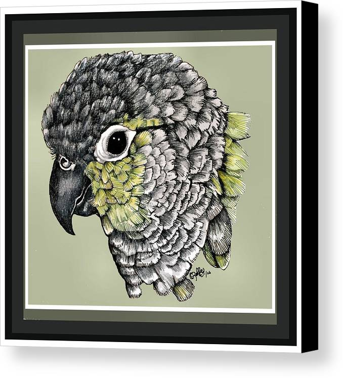 Canvas Print featuring the drawing Green Cheek by Crystal Rolfe