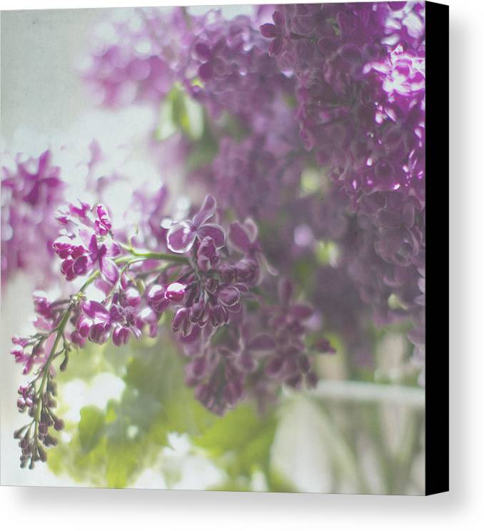 Lilacs Canvas Print featuring the photograph Lalac Bokeh by Rebecca Cozart