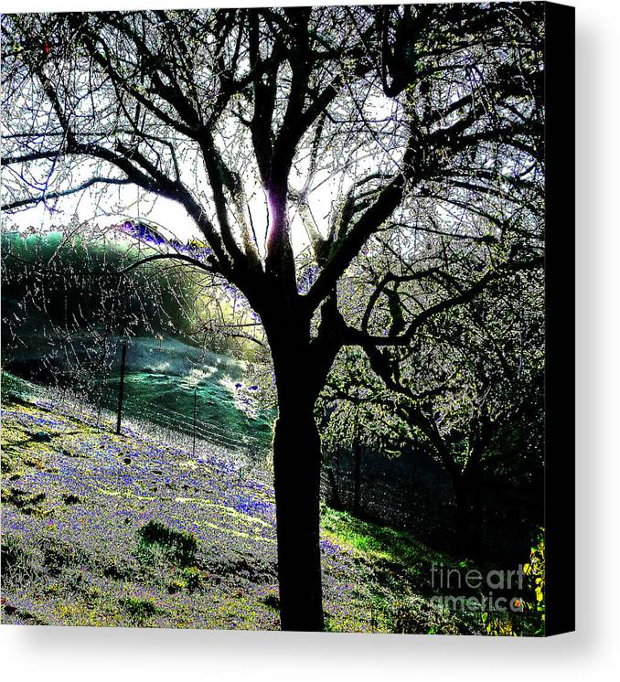 Tree Canvas Print featuring the photograph Magical Morning by JoAnn SkyWatcher