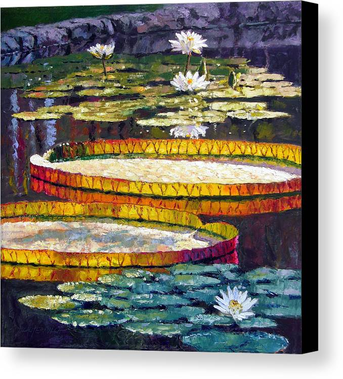 Water Lilies Canvas Print featuring the painting Morning Glow by John Lautermilch