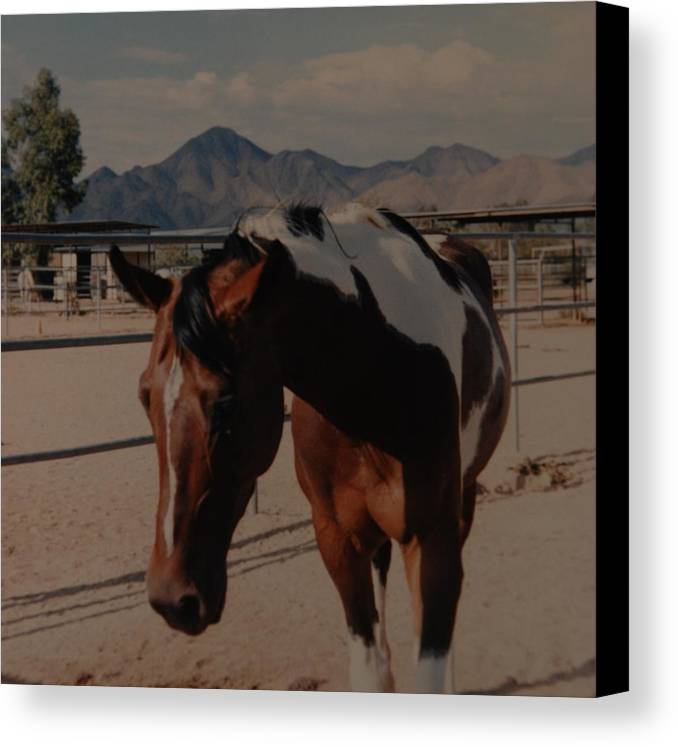 Horse Canvas Print featuring the photograph Mr Ed by Rob Hans