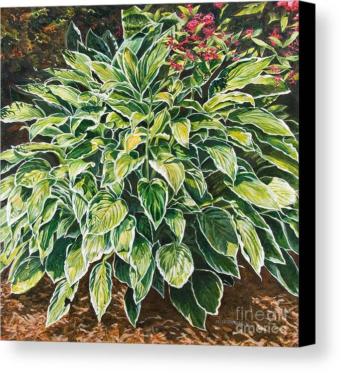 Hosta Canvas Print featuring the painting Sunshine Shadows by Helen Shideler