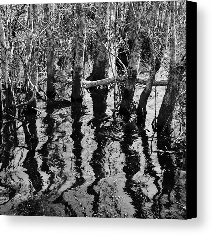 Landscape Canvas Print featuring the photograph Swamp Reflections by Jonathan Garrett
