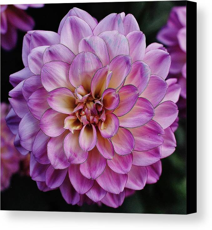 Hudson Valley Flowers Canvas Print featuring the photograph The Art In Flowers 6 by Thomas McGuire