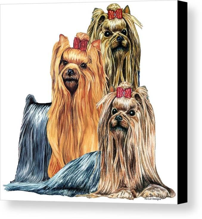 Yorkshire Terrier Canvas Print featuring the drawing Yorkshire Terriers by Kathleen Sepulveda