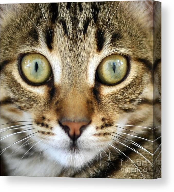 Cat Canvas Print featuring the photograph Cat Portrait Macro Shot by Aleksandar Mijatovic