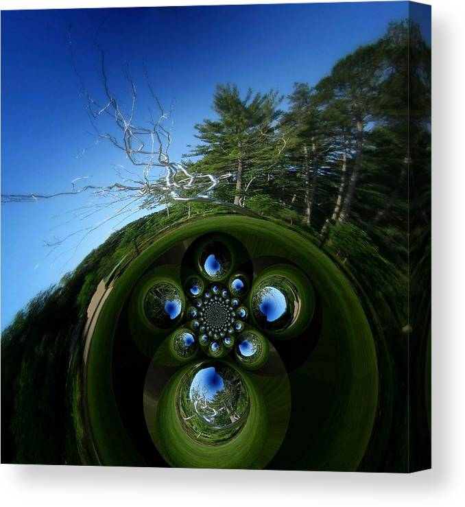 Trees Canvas Print featuring the photograph Silver Trees And Skies Of Blue by Mary Ann Southern