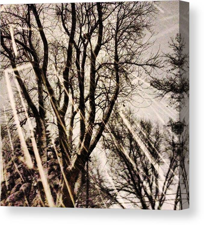 Snow Canvas Print featuring the photograph Winters Eve by Tory Stoffregen