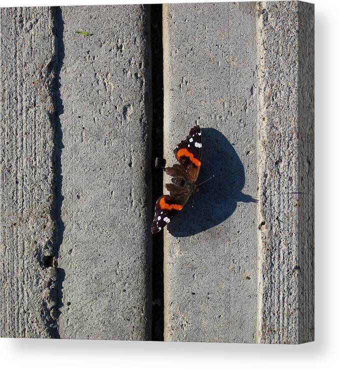 Urban Canvas Print featuring the photograph Butterfly Day 2 by Lyle Crump