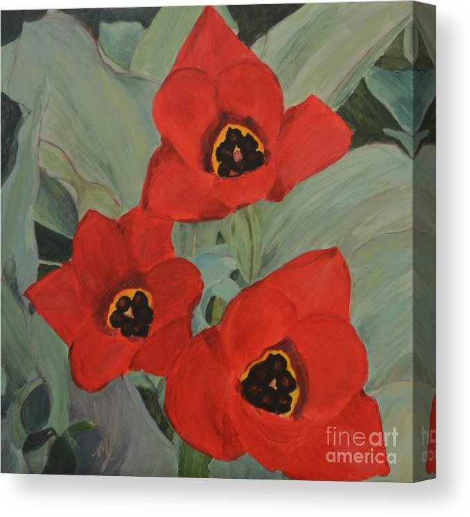 Floral Pictures Canvas Print featuring the painting Red Emperor Tulip Study by Marlene Petersen