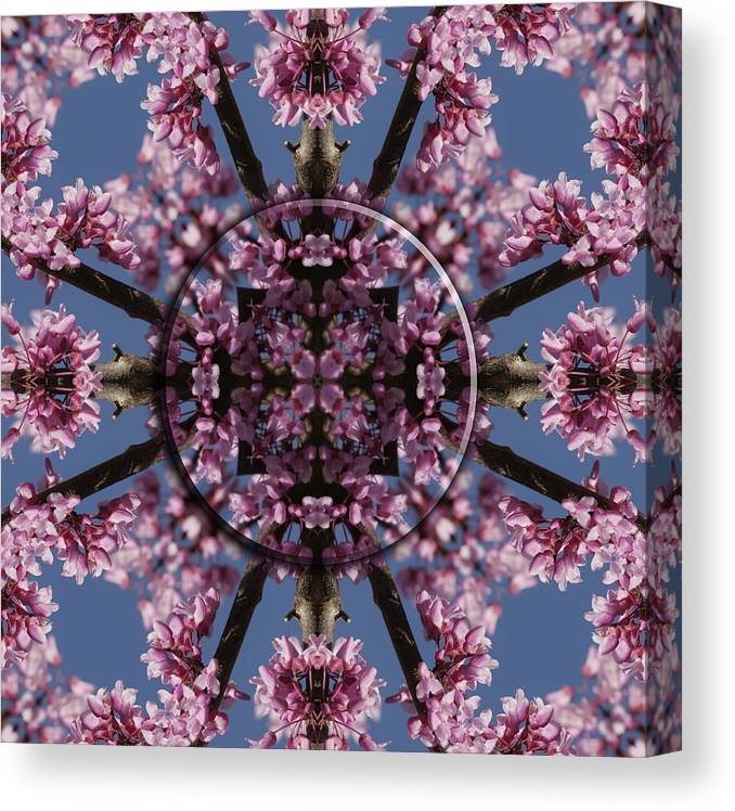 Mandala Canvas Print featuring the photograph Eastern Red Bud Mandala by Alan Skonieczny