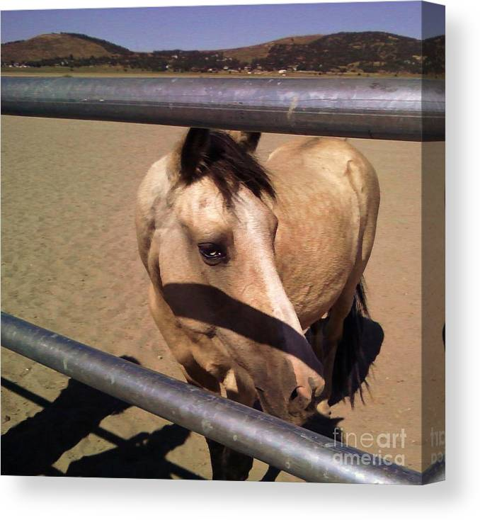 Horses Canvas Print featuring the photograph Throught The Fence by Jamey Balester