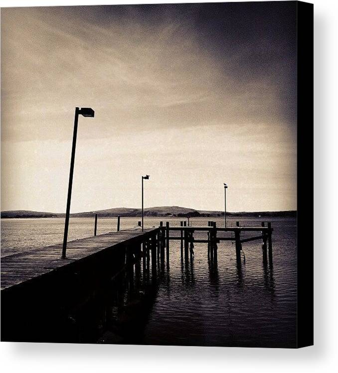 Black And White Canvas Print featuring the photograph 2 Bird Dock by CML Brown