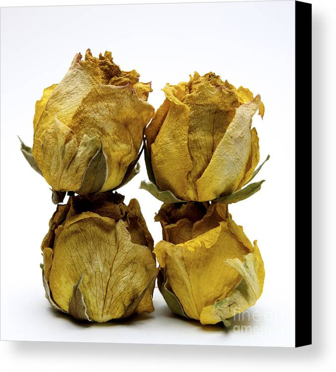 Indoors Canvas Print featuring the photograph Heap Of Wilted Roses by Bernard Jaubert