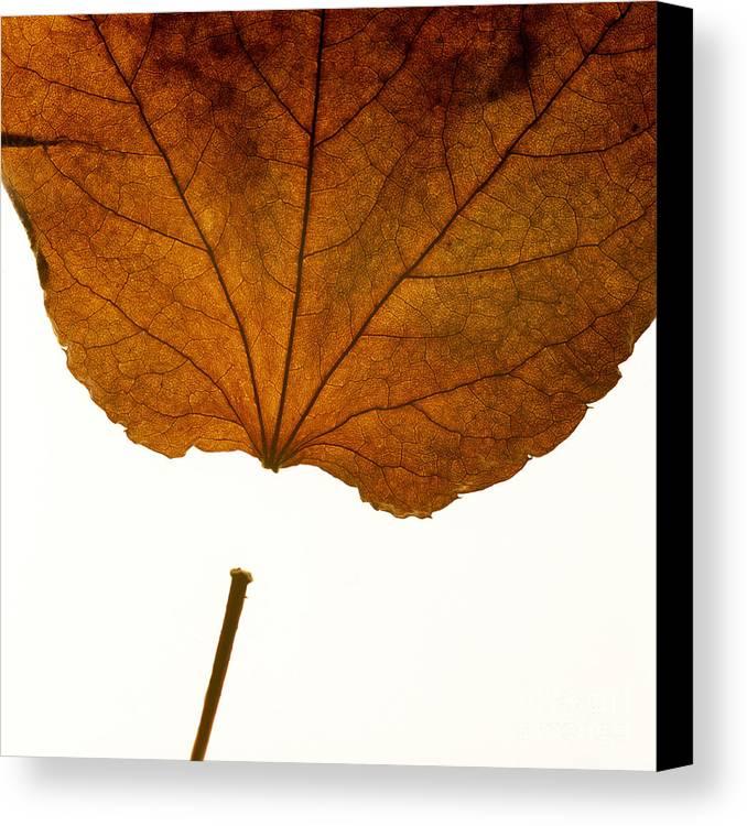 Studio Shot Canvas Print featuring the photograph Leaf by Bernard Jaubert