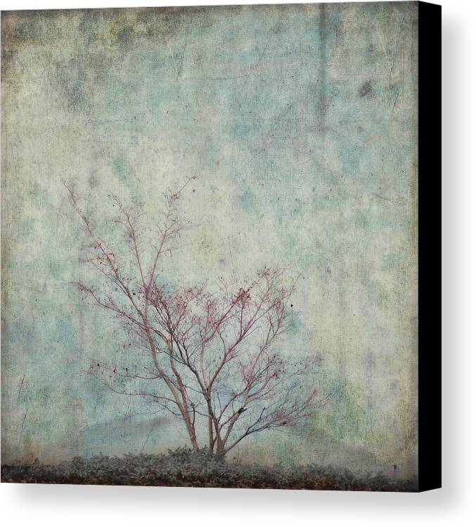 Spring Canvas Print featuring the photograph Approaching Spring by Carol Leigh