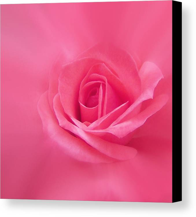 Rose Canvas Print featuring the photograph Beauty by Ernie Echols