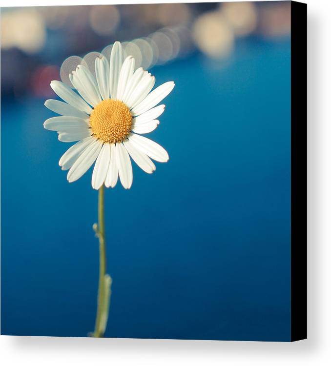 Nenagh Canvas Print featuring the photograph Daisy by Patrick Horgan