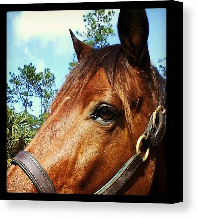 Horse Canvas Print featuring the photograph Dark Horse by Chasity Johnson