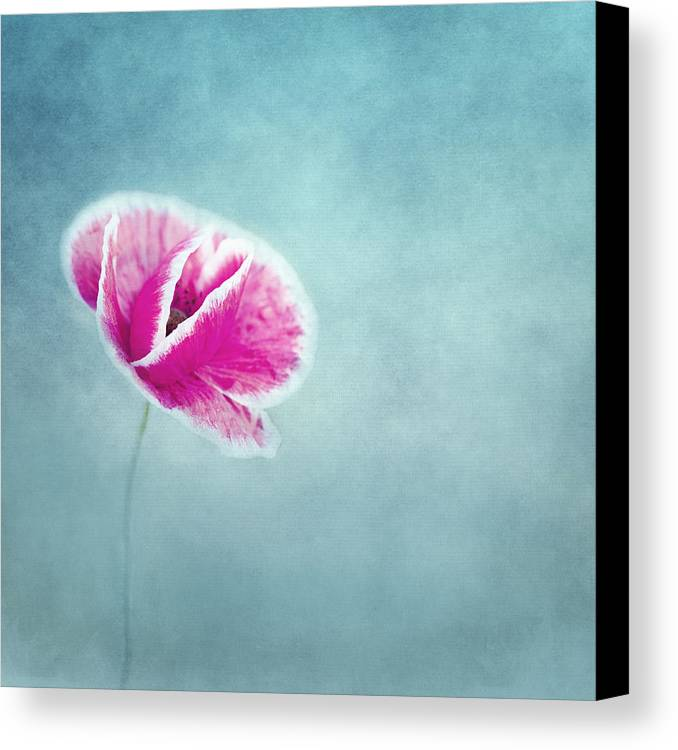 Poppy Canvas Print featuring the photograph Emma by Claudia Moeckel