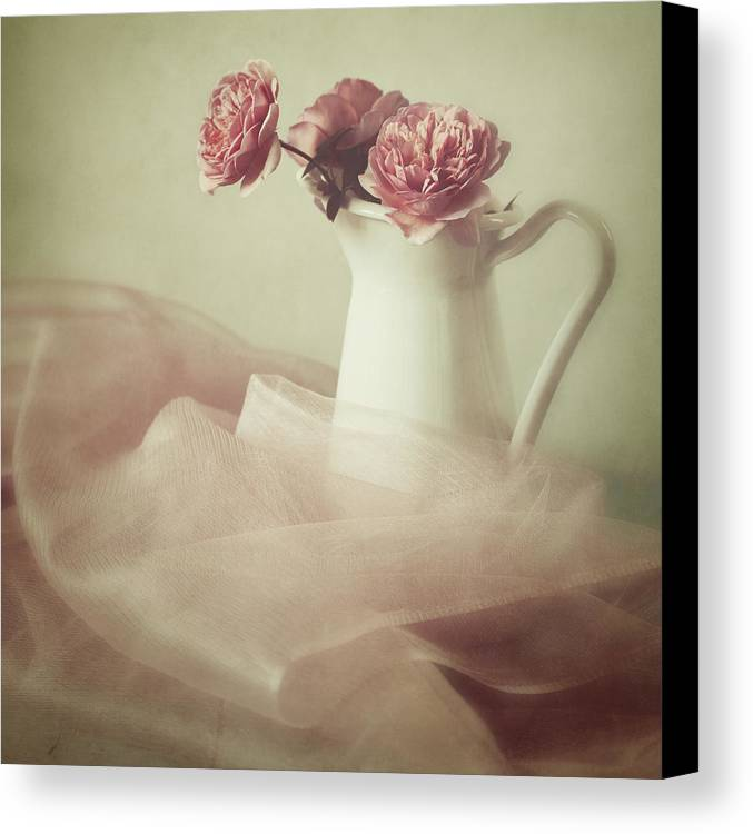 Rose Canvas Print featuring the photograph Ethereal by Amy Weiss