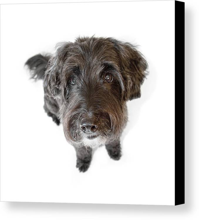 Dog Canvas Print featuring the photograph Hairy Dog Photographic Caricature by Natalie Kinnear