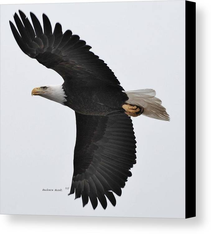 Alaska Canvas Print featuring the photograph Majestic by Barbara Mundt