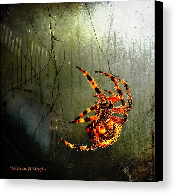 Spider Canvas Print featuring the photograph Nightmares by Karen Slagle