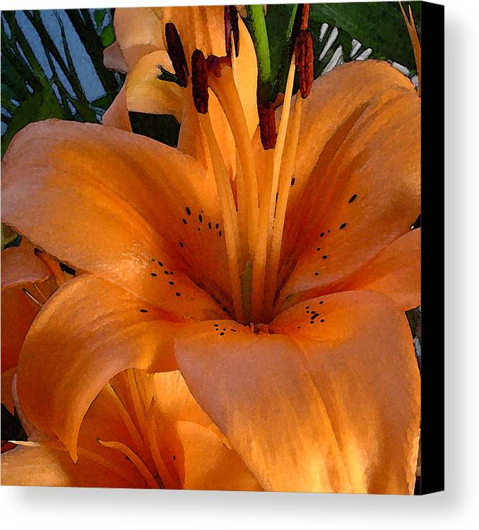 Orange Lily Canvas Print featuring the photograph Orange Lily by Stephen Prestek