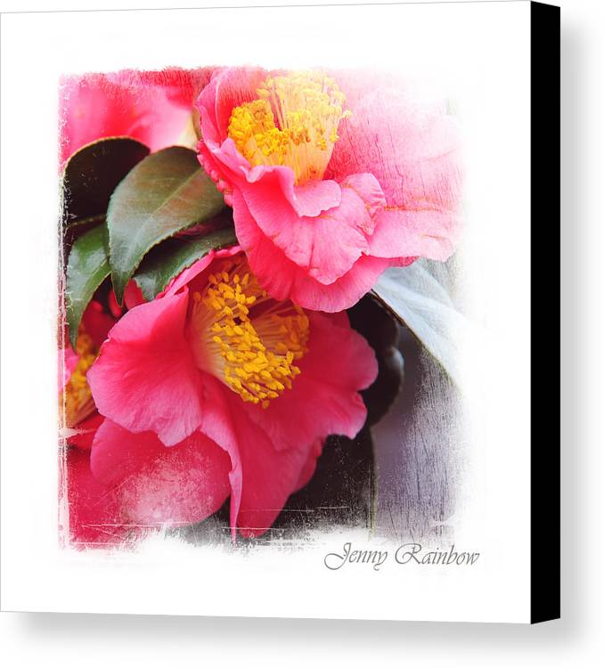 Camellia Canvas Print featuring the photograph Pink Camellia. Elegant Knickknacks by Jenny Rainbow
