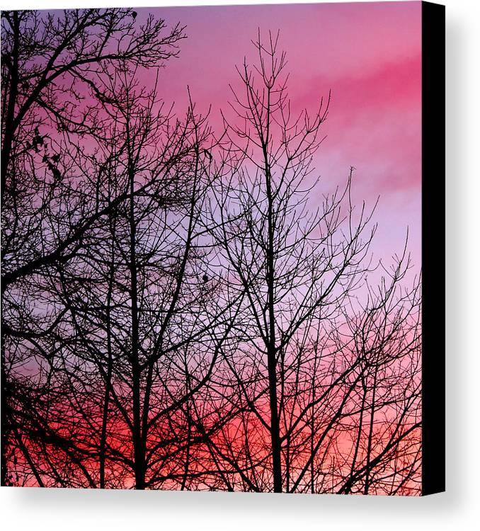 Plant Canvas Print featuring the photograph sunset in late February by John Magnet Bell