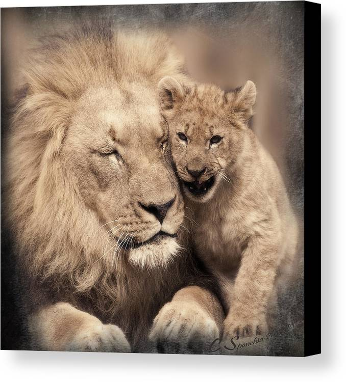 Lion Canvas Print featuring the photograph Tenderness by Christine Sponchia