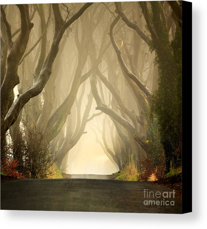 Beech Canvas Print featuring the photograph The Dark Hedges 2011 by Pawel Klarecki