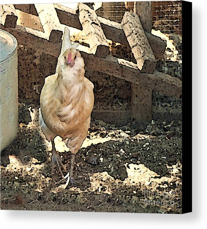 Rooster Art Canvas Print featuring the painting There's A Chicken In The Hen House by Artist and Photographer Laura Wrede