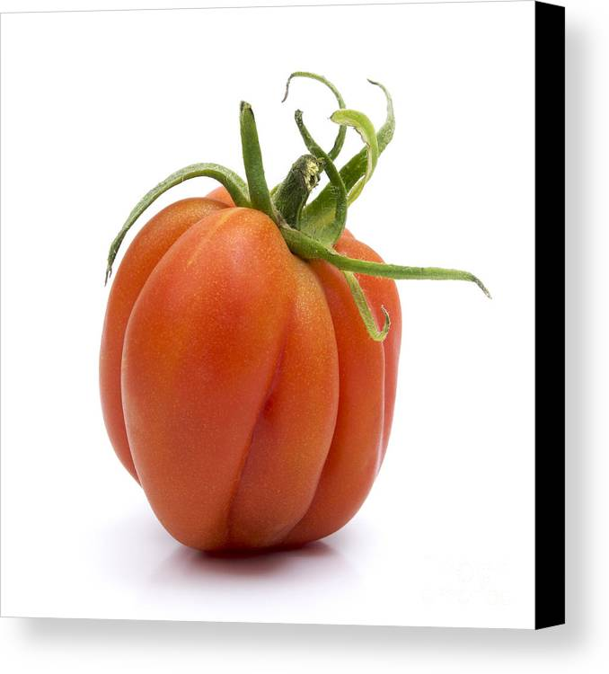 Indoors Canvas Print featuring the photograph Tomato by Bernard Jaubert