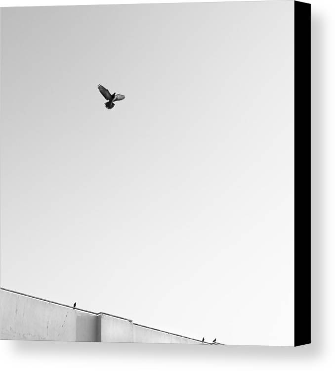 Square Canvas Print featuring the photograph Birds Flying In The Sky by Tontygammy + Images