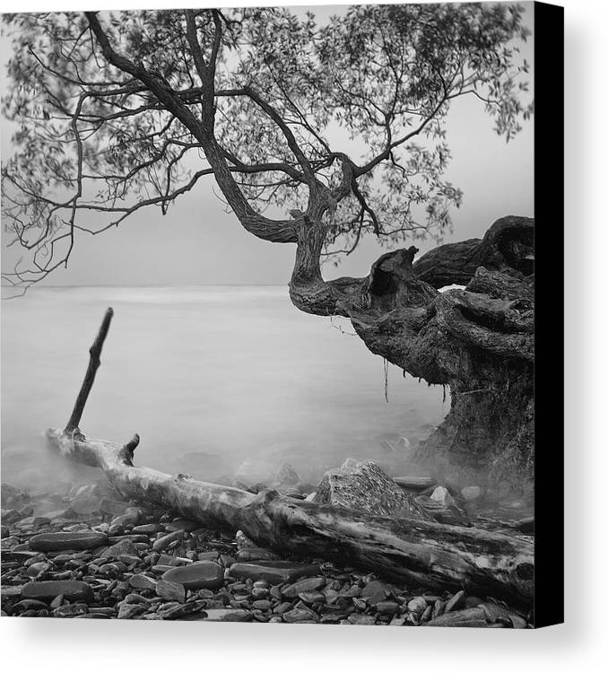 Tree Canvas Print featuring the photograph Black And White Mystic Lake by Andre Distel