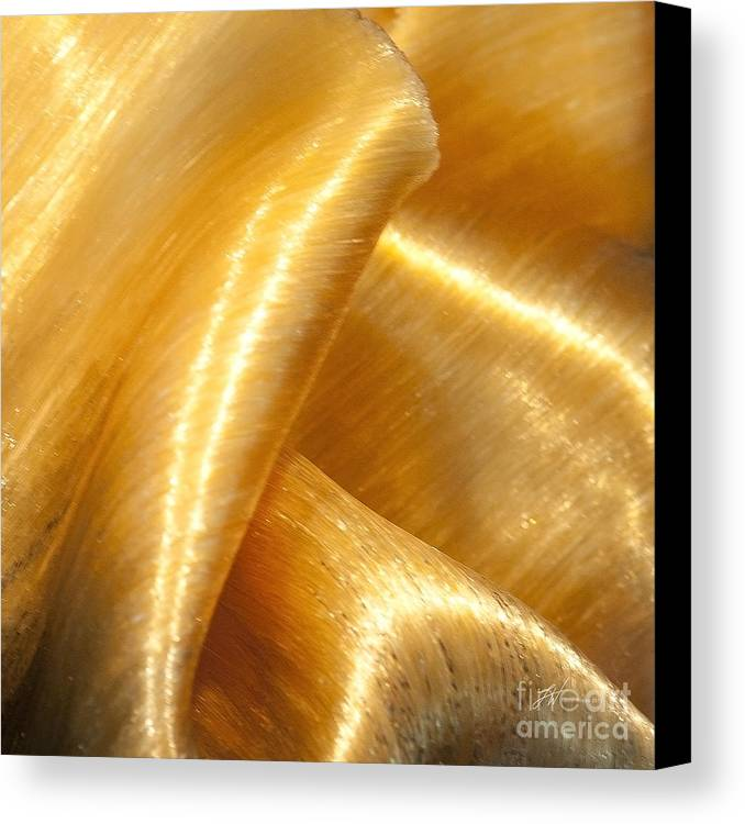 Art Glass Canvas Print featuring the photograph Folding Gold by Artist and Photographer Laura Wrede