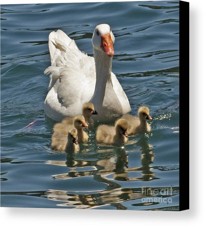 Canvas Print featuring the photograph Mother Goose Plus 5 by Kenny Bosak