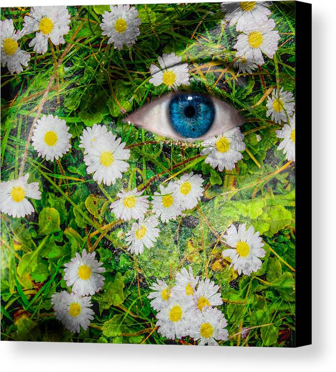 Art Canvas Print featuring the photograph Oxeye Daisy by Semmick Photo
